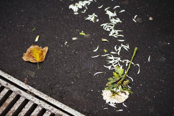 Trasiga blommor på asfalten